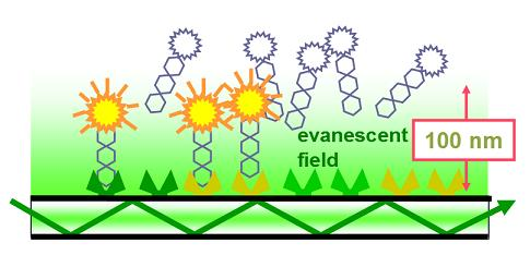 The evanescent field that is formed has a depth equal to the wavelength of the light and the field strength decreases exponentially with the distance away from the slide surface.